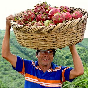 Pitahaya Farmer_2