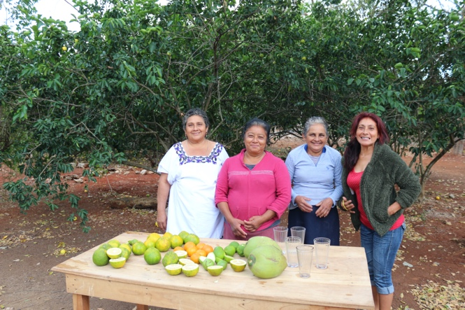 Agroforestry in citrus – Mexico