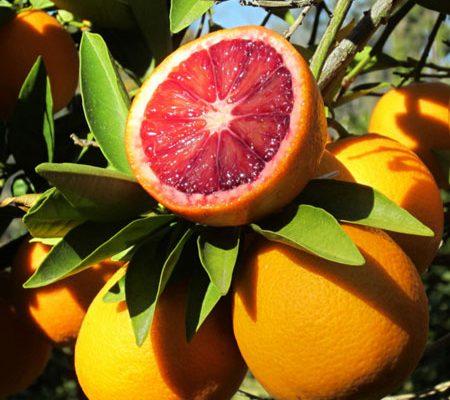 Brazil – Concerns over crop development reported