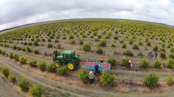Tough times for Aussie growers