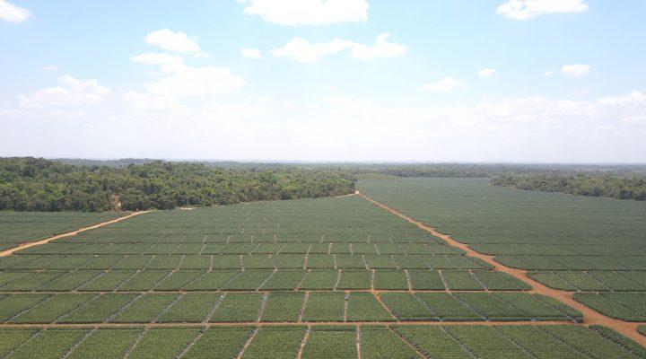 Sustainable juice production in Guatemala